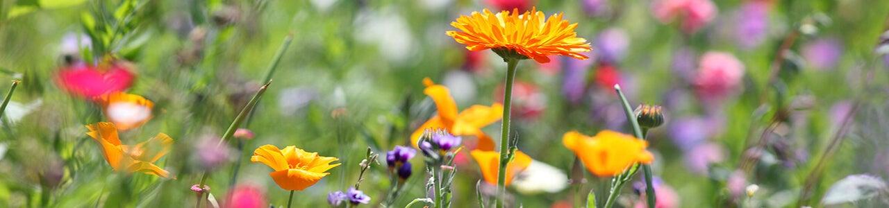 Blüh- und Wildackermischungen